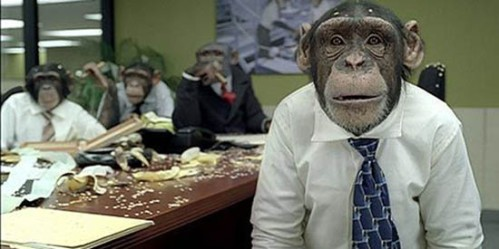 monkeys-office